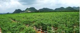 内蒙古自治区开鲁县全国绿色食品原料标准化生产基地