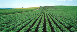 山西省方山县全国绿色食品原料标准化生产基地