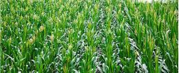 山东省东阿县全国绿色食品原料标准化生产基地