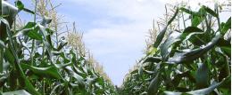山东省阳谷县全国绿色食品原料标准化生产基地