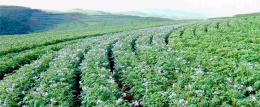 甘肃省陇西县全国绿色食品原料标准化生产基地