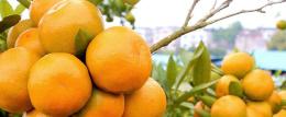 湖北省宜都市全国绿色食品原料标准化生产基地