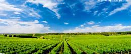 新疆维吾尔自治区玛纳斯县全国绿色食品原料标准化生产基地