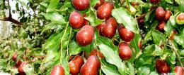 新疆生产建设兵团第一师十二团全国绿色食品原料标准化生产基地
